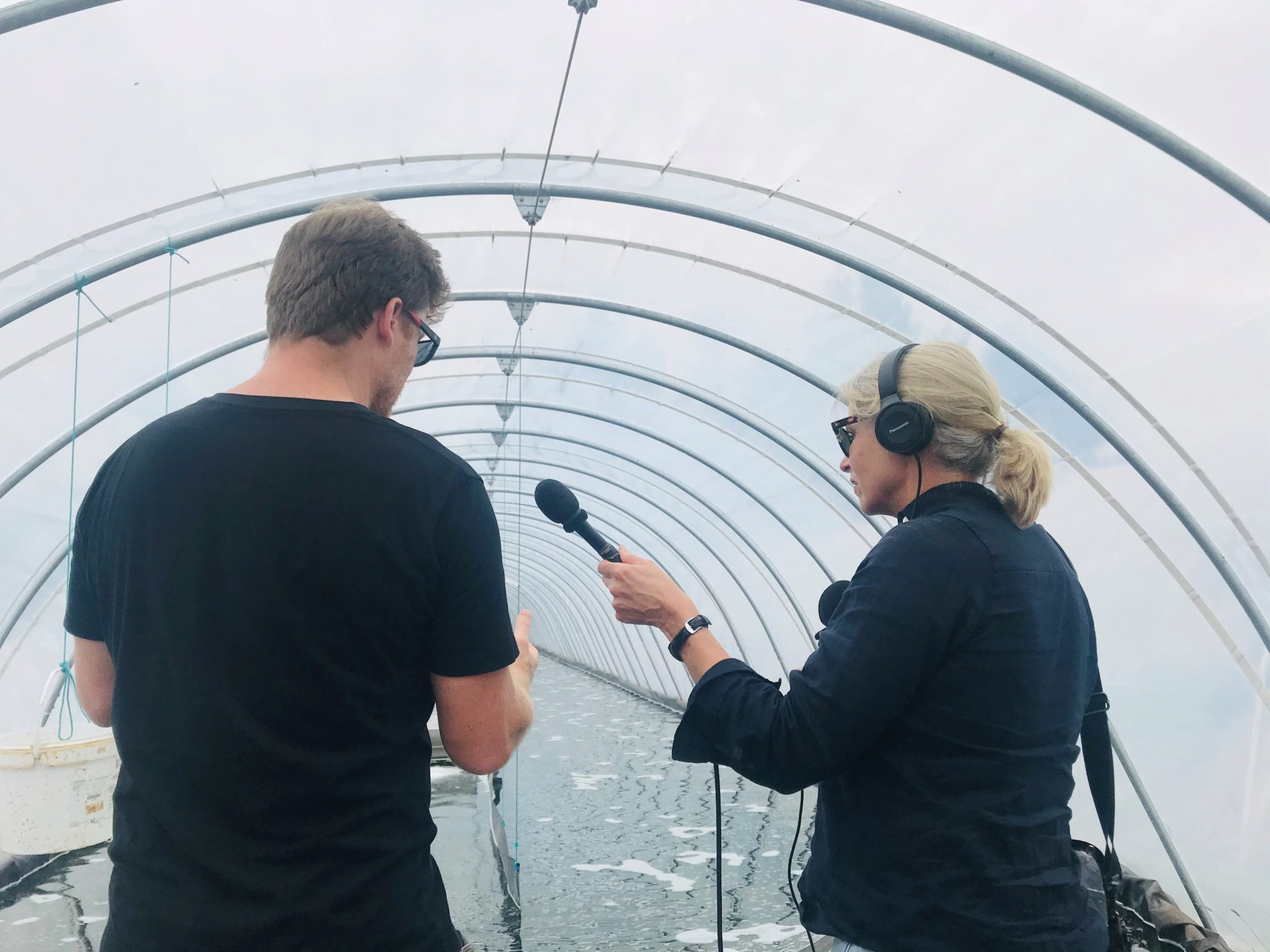 Radio interview at Tahi Spirulina farm